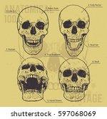 anatomical skulls vector set.... | Shutterstock .eps vector #597068069