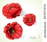 Poppy Flowers. Illustration Of...