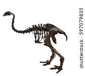 Small photo of Aepyornis fossil (ancient flightless bird)