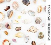 ocean shells on white... | Shutterstock . vector #597089711