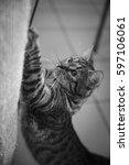 cat | Shutterstock . vector #597106061