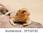 bearded dragons   Shutterstock . vector #59710732
