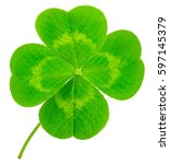 Small photo of St. Patrick's Day symbol. Lucky shamrock clover green heart-shaped leaves isolated on white background in 1:1 macro lens shot