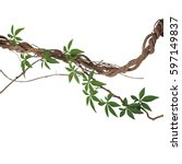 Small photo of Twisted big jungle vines with leaves of wild morning glory liana plant isolated on white background, clipping path included.