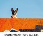 Nice Dog Anglet