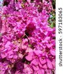 Small photo of Bougainvillea paper flower in colorful color. Texture of Paper flower ( Bougainvillea, Nyctaginaceae ).Selective focus with shallow depth of field.