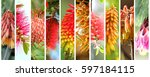 bright and beautiful australian ... | Shutterstock . vector #597184115