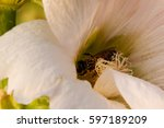 White Flower  Bee
