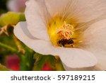 white flower  bee