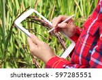 farmers use tablet background... | Shutterstock . vector #597285551