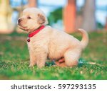 Stock photo puppy dog on the grass 597293135
