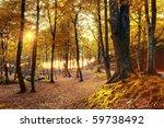 Autumn Scenery. Beautiful Gold...