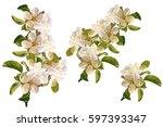 flowering branch of apple... | Shutterstock . vector #597393347