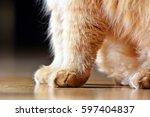 cat's paw | Shutterstock . vector #597404837