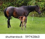 bay horse with her newly born... | Shutterstock . vector #59742863