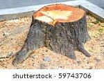 close up shot of cut down tree | Shutterstock . vector #59743706