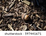 Lone Acorn On The Forest Floor