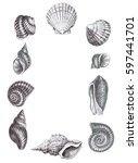 seashells drawing graphic | Shutterstock . vector #597441701