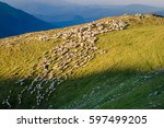 Flock Of Sheep On Alpine...