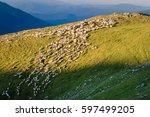 Flock Of Sheep On Alpine...
