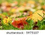 Apple Autumn Leaves Background...