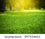 green grass with thee in park   Shutterstock . vector #597524651