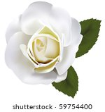 Stock vector beautiful white rose with green leaves vector 59754400