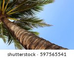 Lying Under A Palm Tree