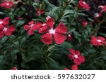 red flower  and green leaf | Shutterstock . vector #597632027