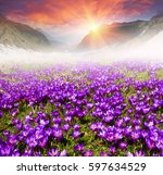 a warm spring day  the snow... | Shutterstock . vector #597634529