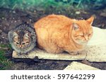 Two Stray Cats Lying Outdoors