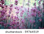 beautiful detail of scented... | Shutterstock . vector #59764519
