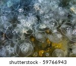 Jellyfish Background. Aurelia...