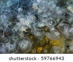 Jellyfish Background. Aurelia...