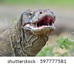 The Komodo Dragon   Varanus...