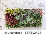succulents  wall   Shutterstock . vector #597812429