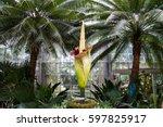 amorphophallus titanum known as ... | Shutterstock . vector #597825917