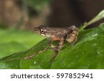 frog | Shutterstock . vector #597852941
