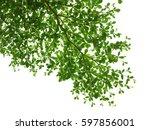 leaf spreads