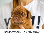 young puppy in a woman's hand ...   Shutterstock . vector #597875069