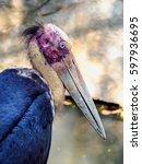 Small photo of Closeup of Lesser adjutant stork