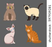 cat breed cute pet portrait... | Shutterstock .eps vector #597939281