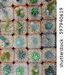 cactus | Shutterstock . vector #597940619