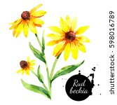 hand drawn watercolor rudbeckia ... | Shutterstock . vector #598016789