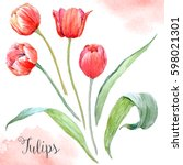 watercolor set drawing a red... | Shutterstock . vector #598021301