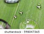 water dot | Shutterstock . vector #598047365