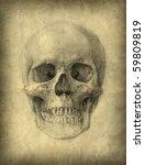 Skull Study Drawing. Pencil On...