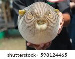 Puffer Fish On Male Hand.