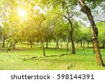 beautiful morning light in... | Shutterstock . vector #598144391