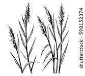 hand drawn sketch of the reed...   Shutterstock .eps vector #598152374